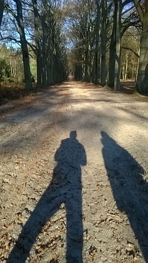 Het Lanenstelsel Van Het Amerongse Bos